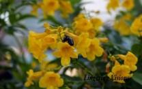 yellowflowers(w)# (10)