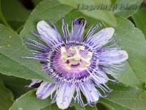 Flower Garden 1(w)# (61)