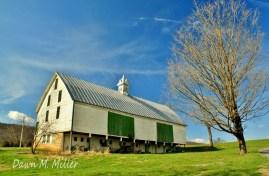 Green and White Barn(w)