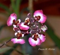Flower Garden 1(w)# (80)