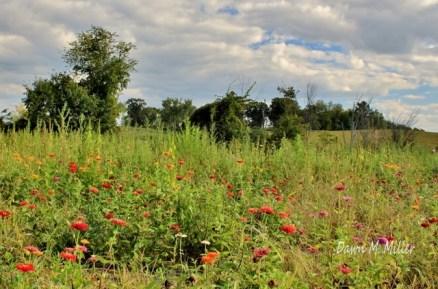 Field of Flowers(w)