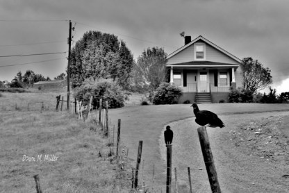 Fences in Black and White(e)# (2)