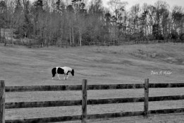 Fences in Black and White(e)# (4)