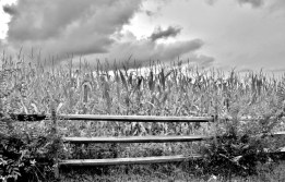 Fences in Black and White(e)# (6)