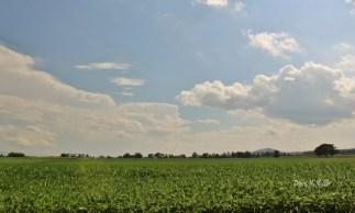 The Sky over a field of Soy