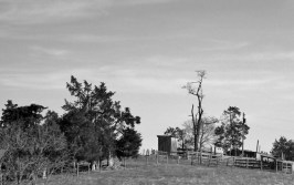 Local Outhouses in Black and White# (2)