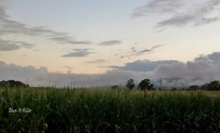 Thundering Through the Corn Field