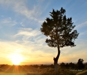 lone-tree-in-a-field-at-sunset