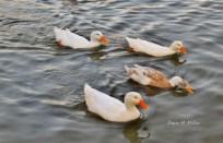 Four Birds# (3)
