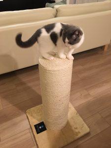 爪とぎポールと猫