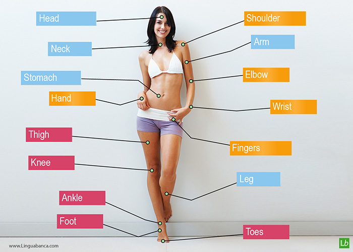 English vocabulary for the human body