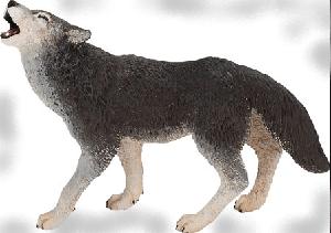 животные на английском - волк