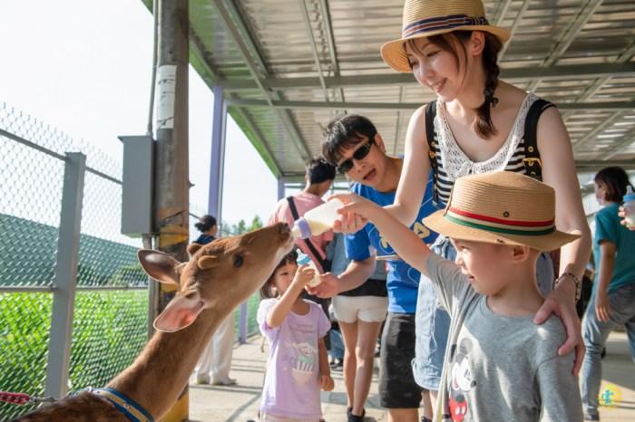 山腳鹿場 – 水鹿之家》桃園親子一日遊景點|台版奈良 機捷親子遊|餵鹿喝奶陪鹿賽跑|與鹿的近距離接觸