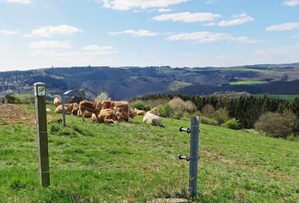 Auch die Kühe genießen die Aussicht.