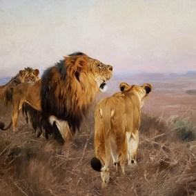 Naturgetreu und majestätisch hat Wilhelm Kuhnert die Löwen gemalt.