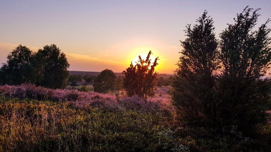 Ein Traum in Lila. Fast schon ein bisschen kitschig... der Sonnenuntergang vom Wilseder Berg in der Lüneburger Heide.
