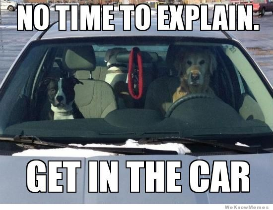 driving-dogs-no-time-to-explain