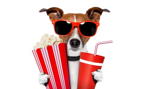 jack-russell-terrier-sunglasses-glasses-drink-tube-popcorn-humor-white-background