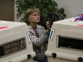 Pups arrive at O'Hare Airport
