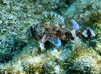 Unterwasserwelt der Ägäis Teil 2
