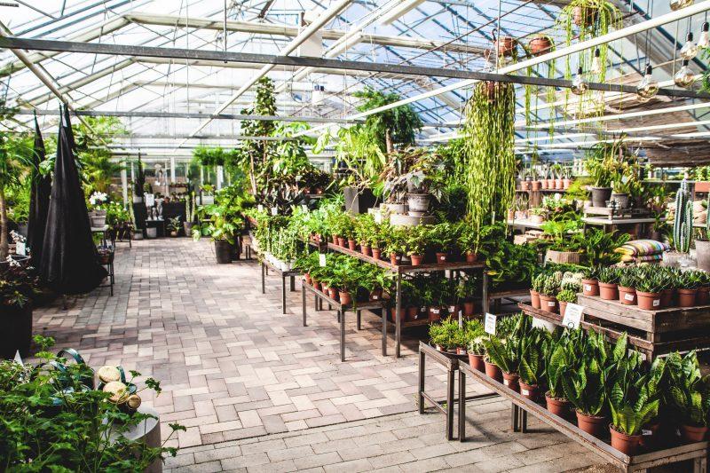 Vi gör plats för julen. 30% på alla gröna växter