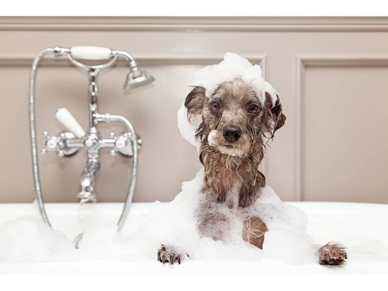 Perfect Opportunity to Have Your Own Dog Grooming Business for ...