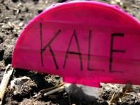 KaleSign