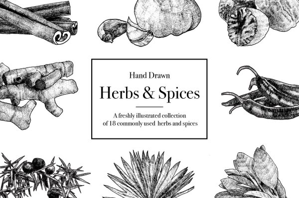 Hand Drawn Herbs and Spices