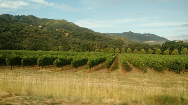 Vineyards through the car window.