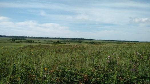 Prairie for as far as the eye can see.