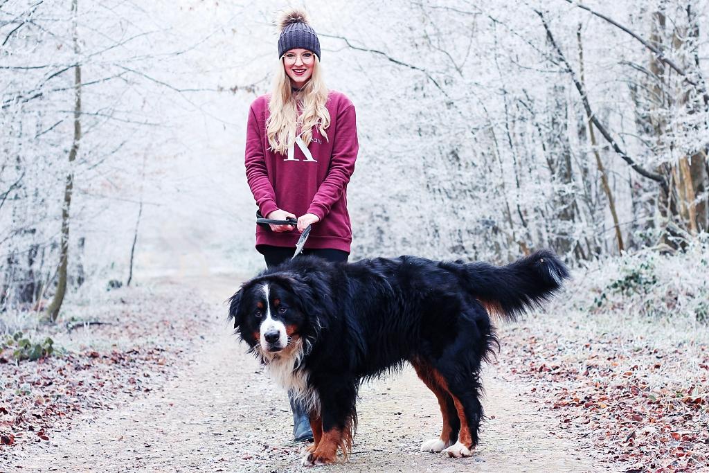 Erinnerungen fürs Leben, Erinnerungen, Shooting, Bilder, Hundeshooting, Shooting mit Hund, Berner, Bernersennen, Bernersennenhund, Blogger