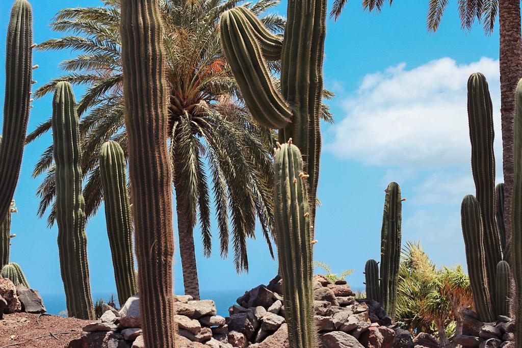 Oasis Park, Oasis Park Fuerteventura, Fuerteventura, Was unternehmen auf Fuerteventura, Kamele, Zoo, Tiere, Tierpark, Kanaren, animals