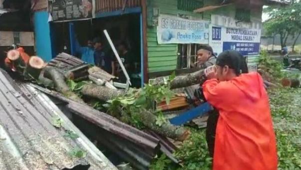Diguyur Hujan Deras Angin Kencang Serta Petir Akibatkan 18 Pohon Tumbang Di Sejumlah Wilayah Kota Padang Sumatera Barat Lintas Republik