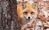 Simogasd meg Te is az eljövendő mobil Firefox-ait