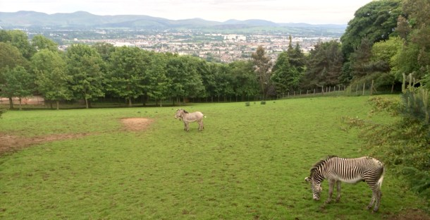 Edinburgh Zoo view
