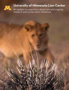 Lion and porcupine