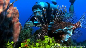 Lionfish in Cozumel Mexico