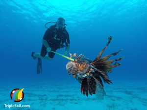 Lionfish Hunting in Cozumel Mexico
