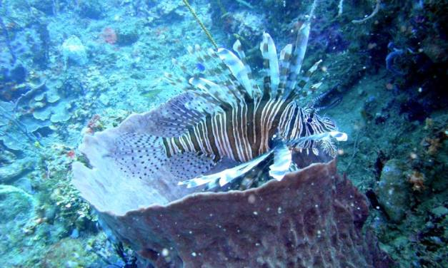 The lionfish plague is now spreading to the Mediterranean