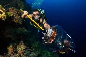 Where to hunt lionfish