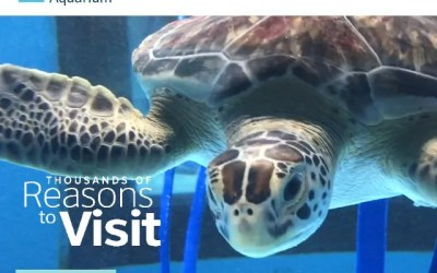 South Carolina Aquarium Lionfish News