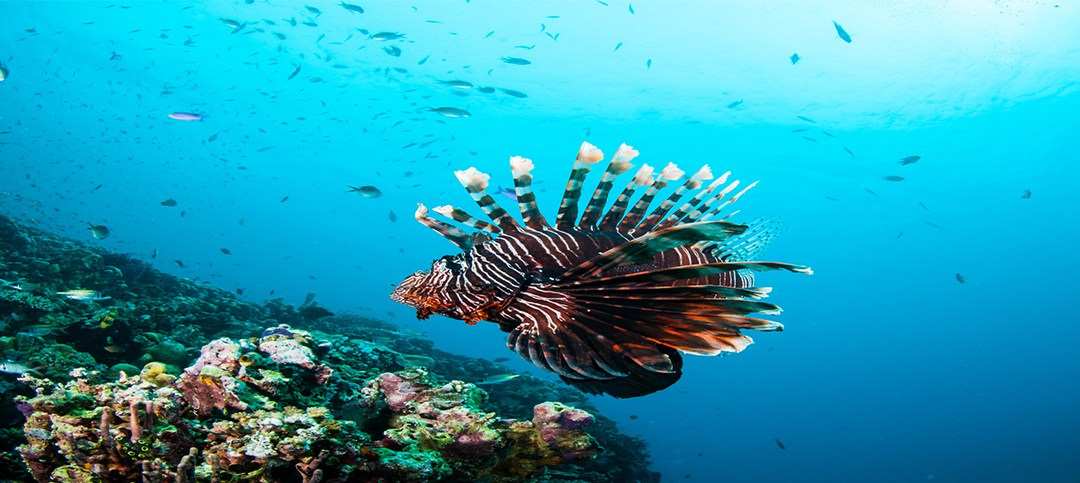 Welcome to the Lionfish Hunting Blog!