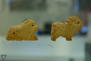 Lion Crackers