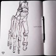Right Foot - Dorsal Surface