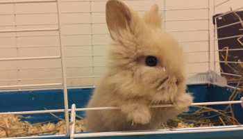 things-to-know-before-getting-a-rabbit
