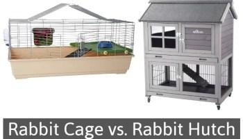 indoor vs outdoor rabbit hutch