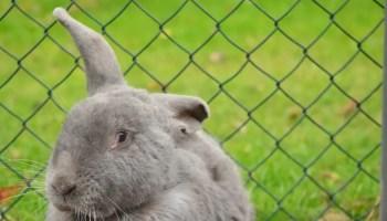 rabbit fence playpen indoor
