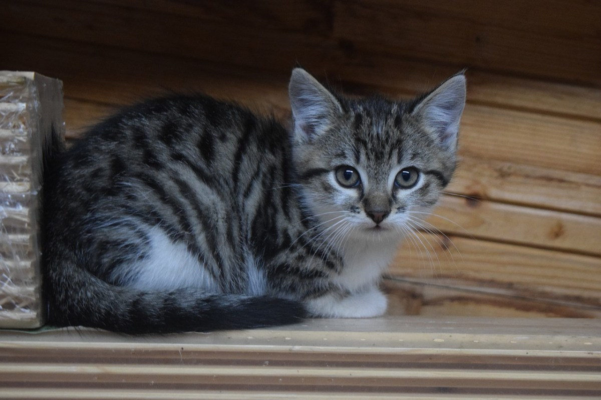 Looking for a cat kennel over the holiday season?