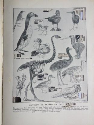 Extinct and rare habits