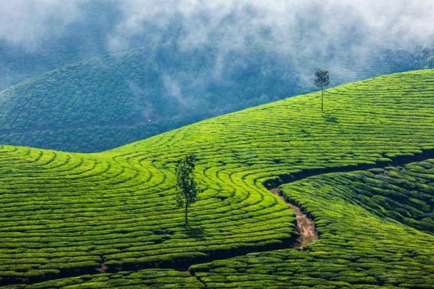 Kerala-India-5